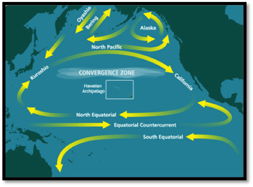 Image: The patch is created in the gyre of the North Pacific Subtropical Convergence Zone.
